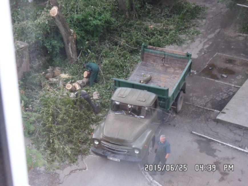 У Львові на вулиці Пасічній зрізали тополі та яблуню із плодами (ФОТО), фото-6