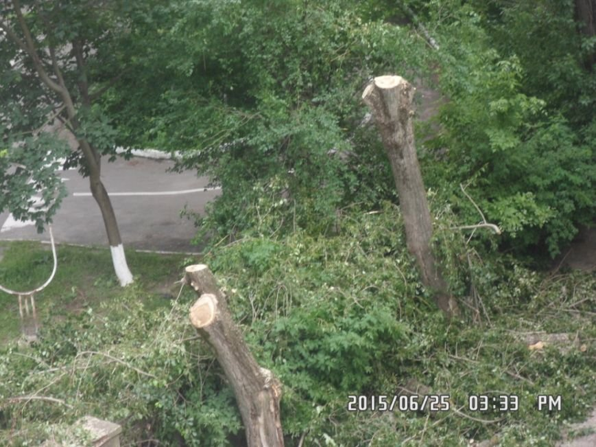 У Львові на вулиці Пасічній зрізали тополі та яблуню із плодами (ФОТО), фото-2