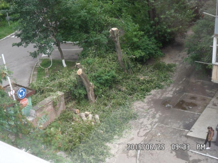 У Львові на вулиці Пасічній зрізали тополі та яблуню із плодами (ФОТО), фото-1