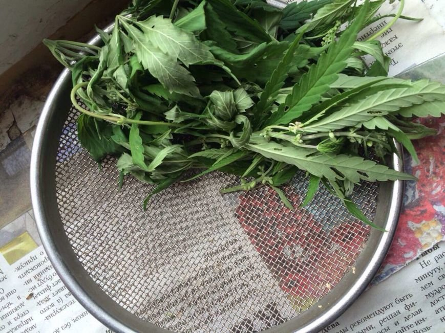 У жителя Баглейского района изъяли 70 кустов конопли и марихуану, фото-9