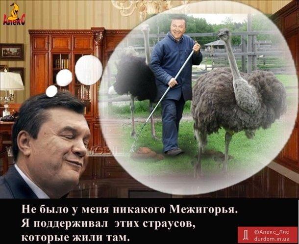 Бензиновый кризис, цены, страусы Януковича, потоп в Сочи - над чем смеялся интернет (фото) - фото 2