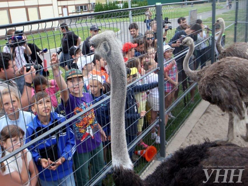 «Еврокемп - Межигір'я» – відкрив двері дітям, ФОТО (фото) - фото 3