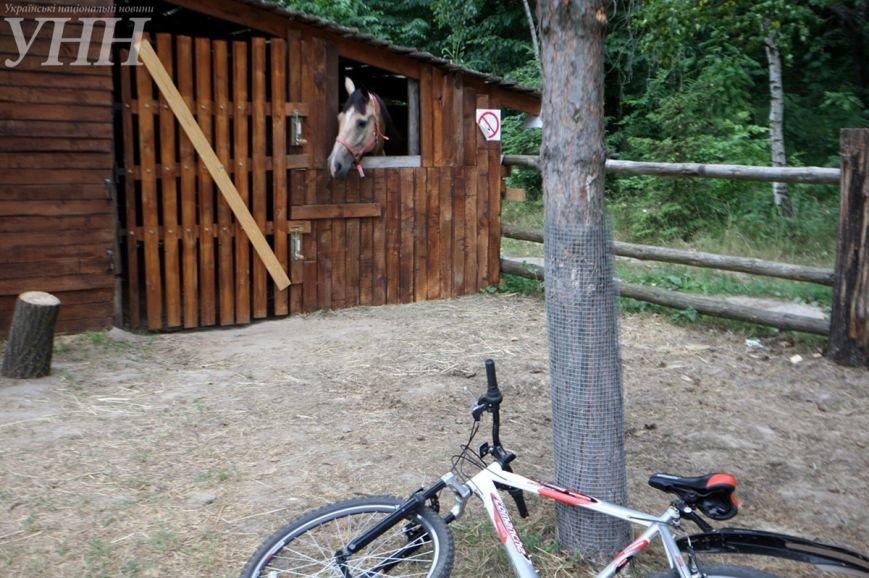 «Еврокемп - Межигір'я» – відкрив двері дітям, ФОТО (фото) - фото 9