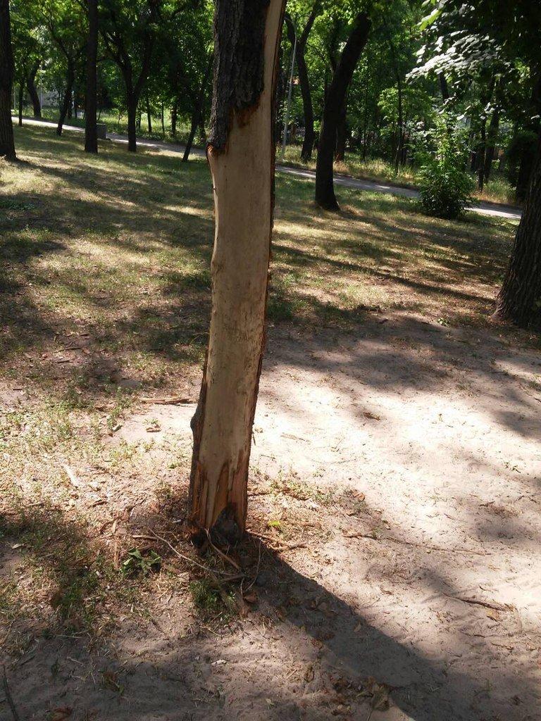 Что остается после отдыха криворожан в парках и скверах? (ФОТО) (фото) - фото 1