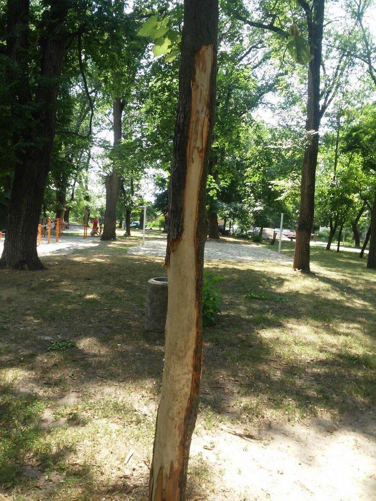 Что остается после отдыха криворожан в парках и скверах? (ФОТО), фото-4