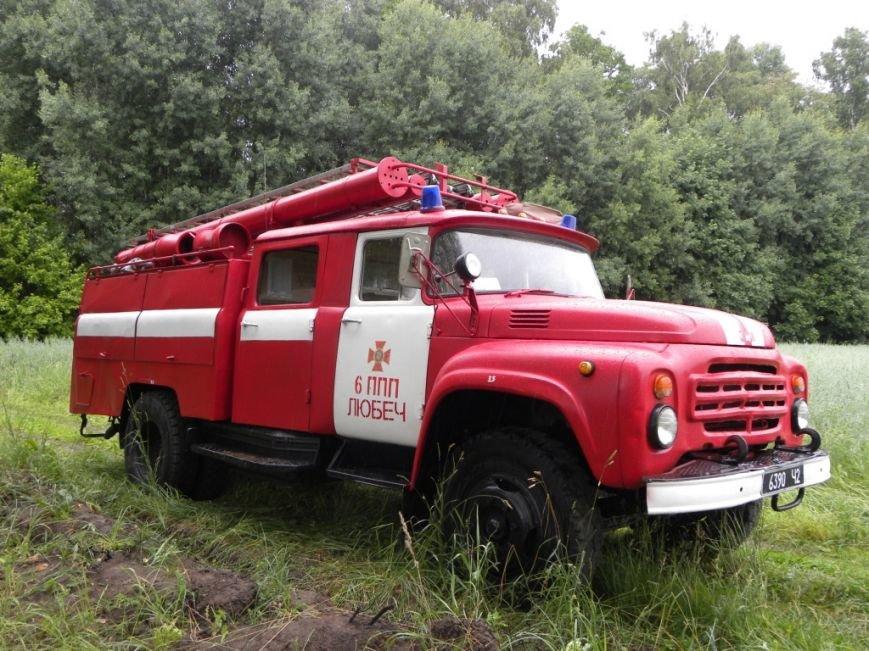 В Черниговской области сожгли 180 свиней (фото) - фото 1