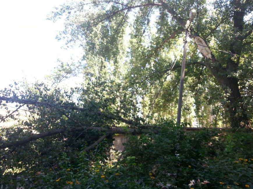В Волгограде на тротуар рухнули дерево и световая опора (фото) - фото 1