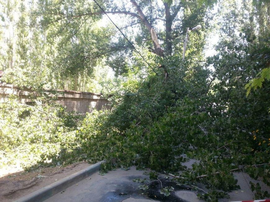 В Волгограде на тротуар рухнули дерево и световая опора, фото-2