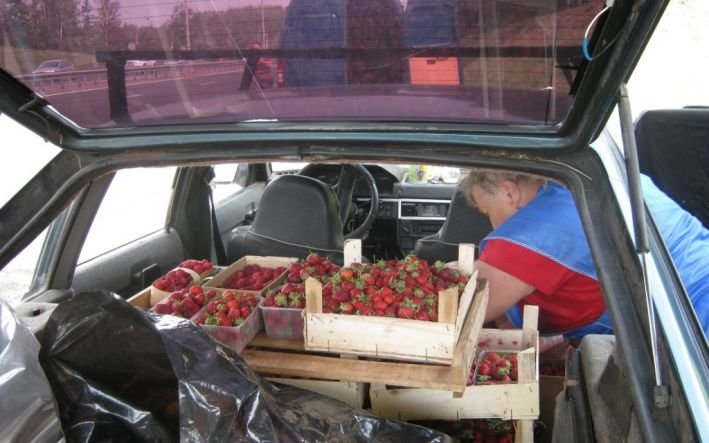 49 правонарушений зафиксировали полицейские Домодедово в рамках ОПМ «Придорожная торговля» (фото) - фото 1