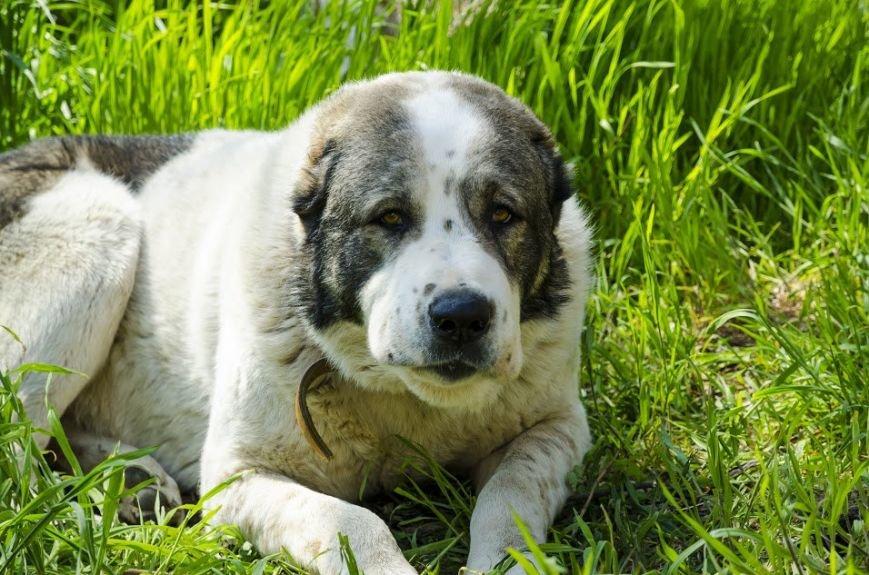 В Николаеве собака-патриот ищет дом (ФОТО) (фото) - фото 5