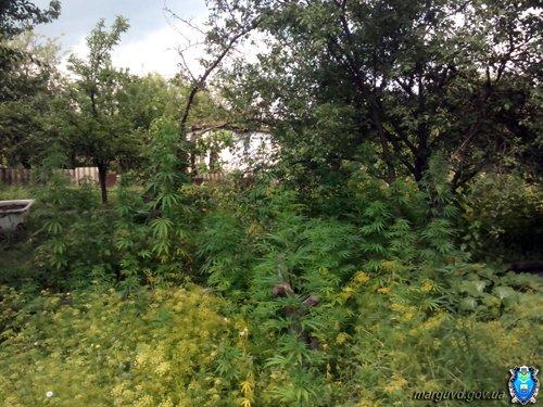 04_07_2015_Mariupol_Konoplya_02s (1)