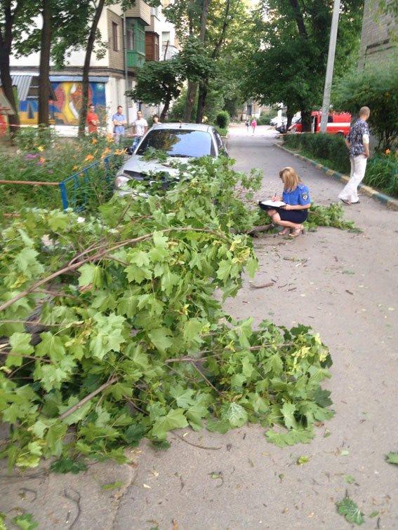 В районе Ботанического сада на женщину с ребенком рухнуло дерево(ФОТО) (фото) - фото 1