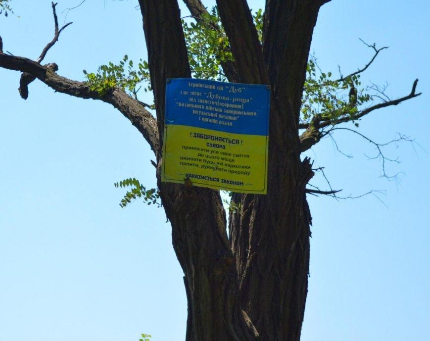 В Кривом Роге активисты навели порядок в «Дубовой роще» (ФОТО) (фото) - фото 1
