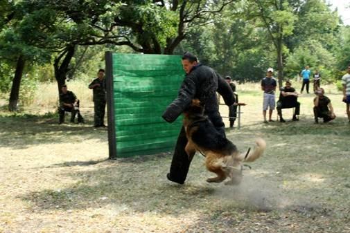 В Полтаві обрали найкращого кінолога та собаку (фото) - фото 2