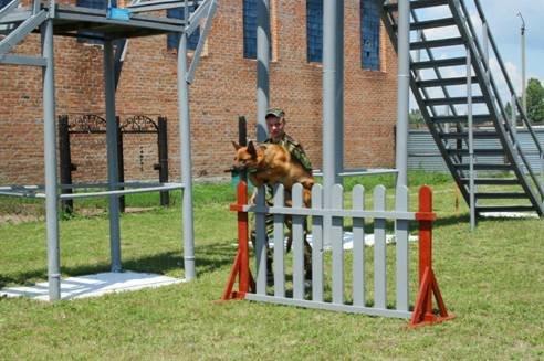 В Полтаві обрали найкращого кінолога та собаку (фото) - фото 1