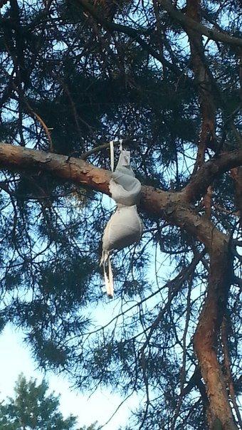 В Николаеве деревья украшают нижним бельем (ФОТОФАКТ) (фото) - фото 1