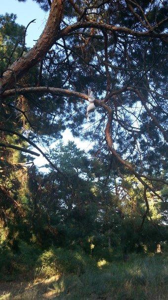 В Николаеве деревья украшают нижним бельем (ФОТОФАКТ) (фото) - фото 2