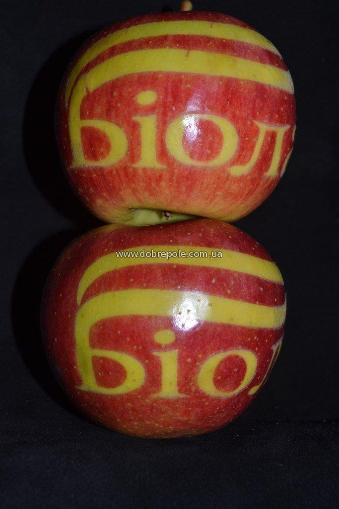 Татуированные яблоки: в Добропольском районе вырастили необычный урожай (фото) - фото 1