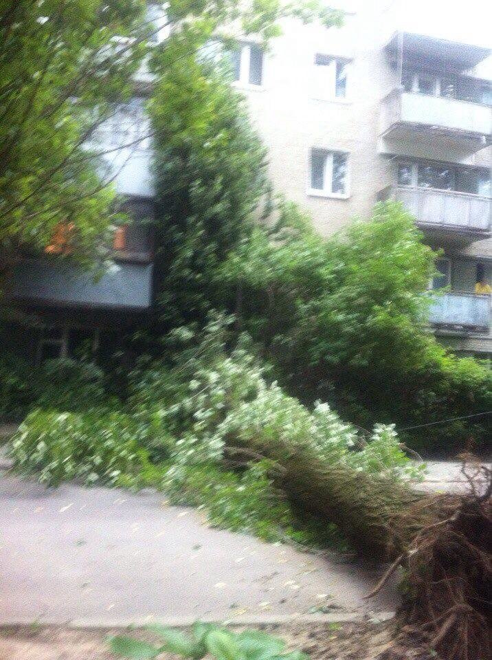 У Львові від буревію впало дерево (ФОТО) (фото) - фото 2