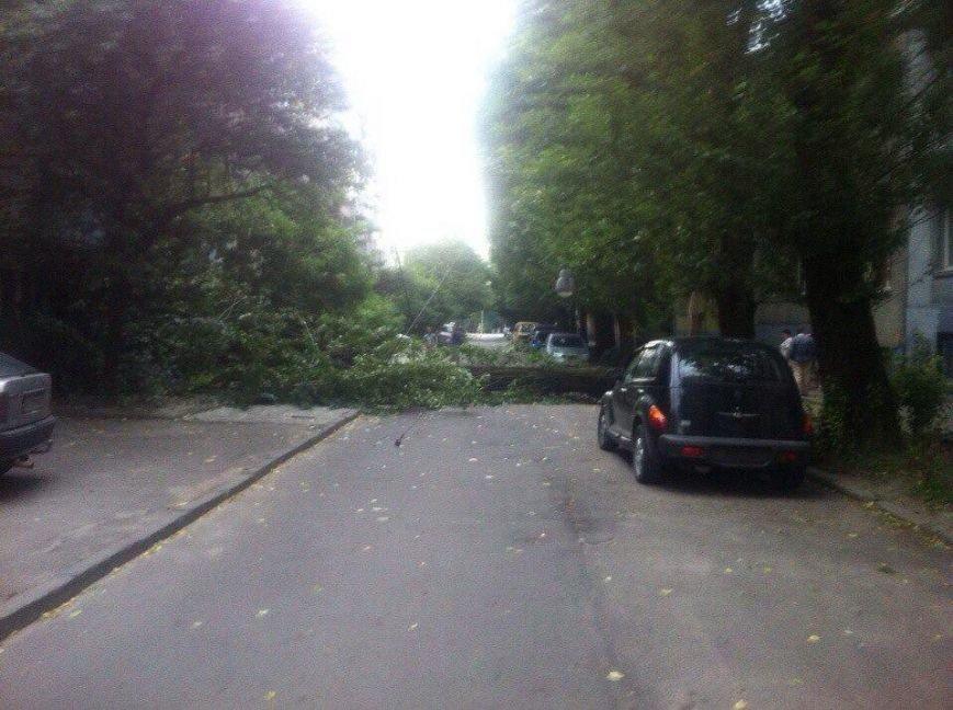 У Львові від буревію впало дерево (ФОТО) (фото) - фото 3