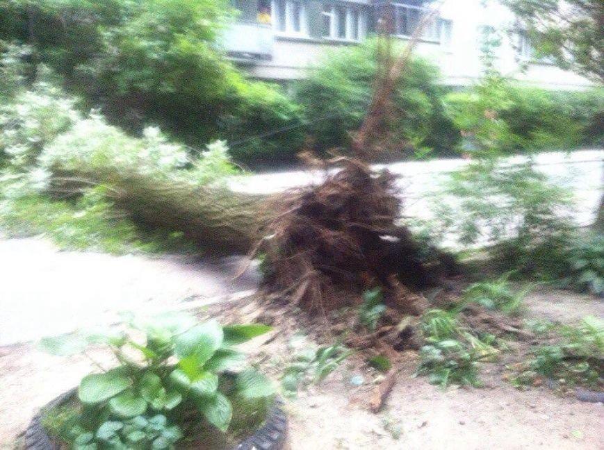 У Львові від буревію впало дерево (ФОТО) (фото) - фото 1