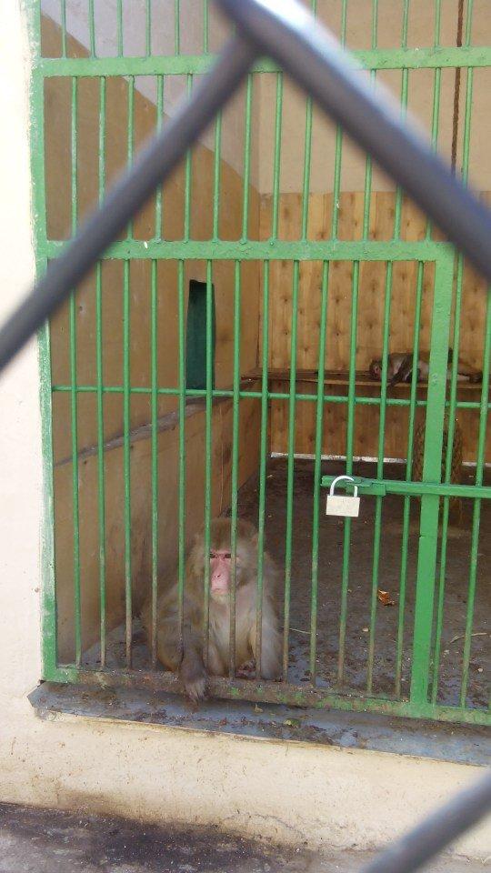 У днепропетровчан появилась возможность «усыновить» животных из городского зоопарка (ФОТО) (фото) - фото 1