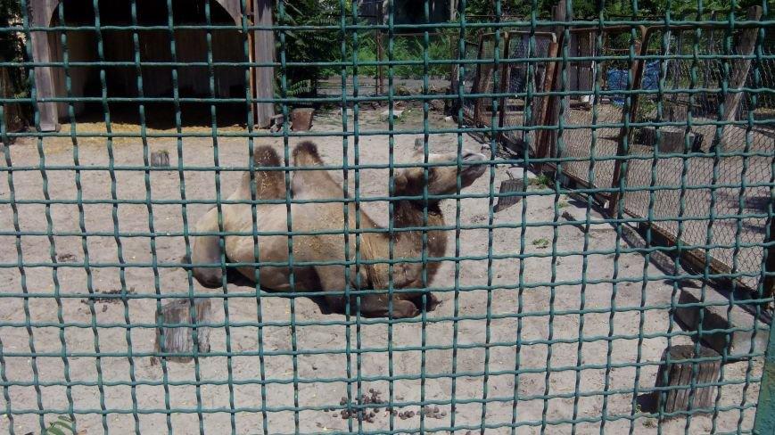 У днепропетровчан появилась возможность «усыновить» животных из городского зоопарка (ФОТО), фото-7