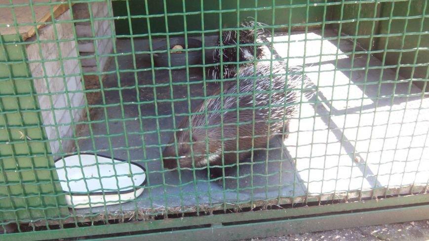 У днепропетровчан появилась возможность «усыновить» животных из городского зоопарка (ФОТО) (фото) - фото 2