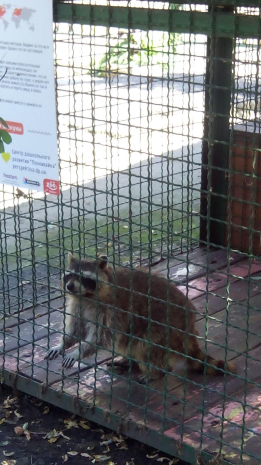 У днепропетровчан появилась возможность «усыновить» животных из городского зоопарка (ФОТО) (фото) - фото 3