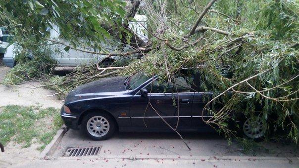Наслідки вчоршньої негоди у Львові: у місті впало 3 дерева та обвисають обірвані дроти (ФОТО) (фото) - фото 1