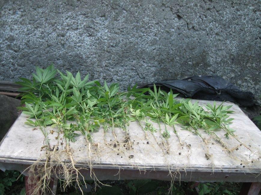 Операция «Мак» продолжает давать плодотворные результаты по изъятию нелегальных посевов мака и конопли, фото-4