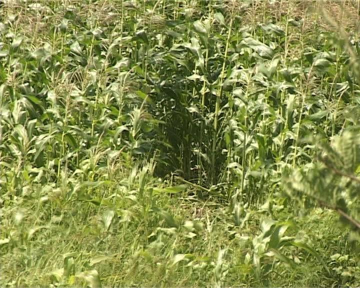 Смертельное ДТП на трассе Армавир - Красная поляна (фото) - фото 1