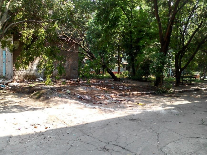 В центре Запорожья трактор, который убирал мусор, случайно выкорчевал дерево (ФОТО) (фото) - фото 4