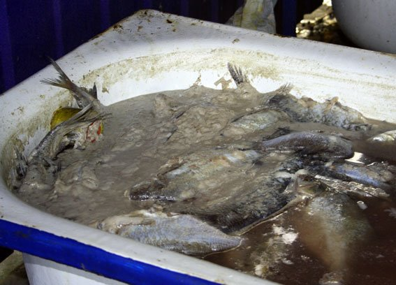 В Кременчуге водная милиция прекратила деятельность подпольного цеха по переработке рыбы (ФОТО) (фото) - фото 1