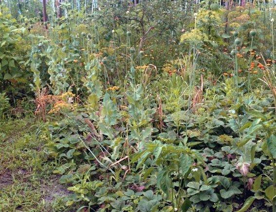 Пенсіонерка з Полтавщини займалася розведенням наркотичних рослин (фото) - фото 1