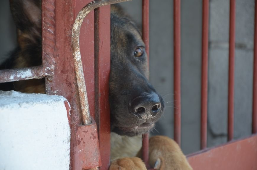 Мариупольским подросткам показали, что скрывается за колючей проволокой (ФОТО+ВИДЕО), фото-16
