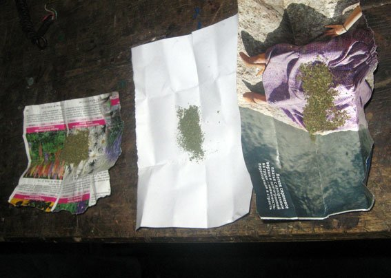На Полтавщині чоловік висаджував наркотики (фото) - фото 1