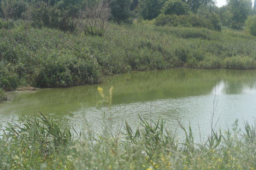 Изобилие зловонных «ароматов»: в Димитрове жители п. Новатор безрезультатно борются с канализацией, фото-1