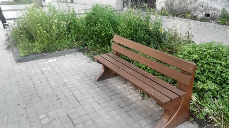 Центр Сум зарос травой (ФОТО) (фото) - фото 1