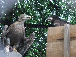 В зоопарке Николаеве начался беби-бум в отделе орнитологии (ФОТО) (фото) - фото 1