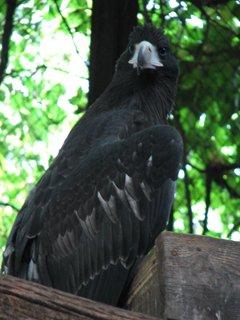 В зоопарке Николаеве начался беби-бум в отделе орнитологии (ФОТО) (фото) - фото 3