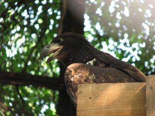 В зоопарке Николаеве начался беби-бум в отделе орнитологии (ФОТО) (фото) - фото 2