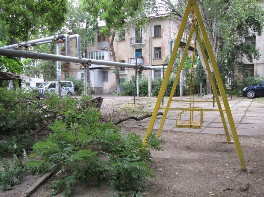 В Феодосии падают деревья не прошедшие обрезку (Фото), фото-1