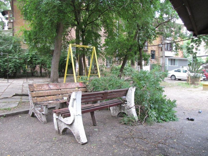 В Феодосии падают деревья не прошедшие обрезку (Фото), фото-5