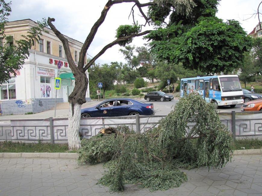 В Феодосии падают деревья не прошедшие обрезку (Фото), фото-4