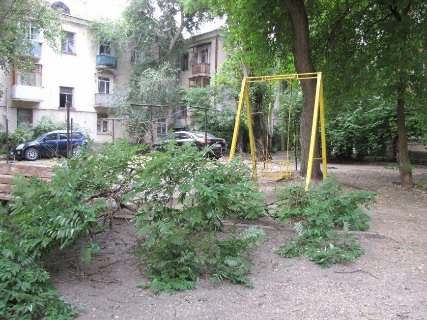 В Феодосии падают деревья не прошедшие обрезку (Фото), фото-6