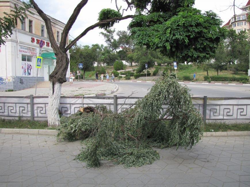 В Феодосии падают деревья не прошедшие обрезку (Фото), фото-2