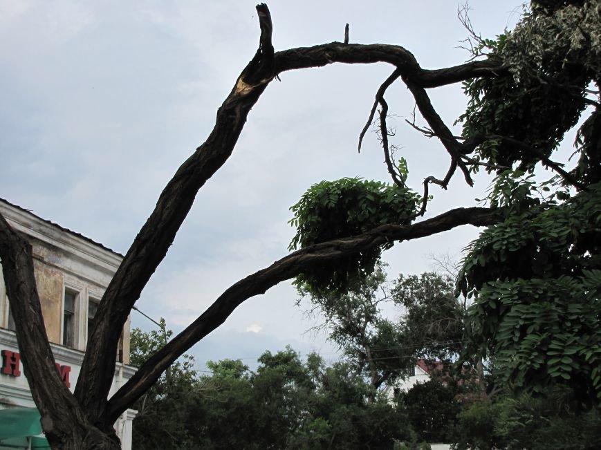 В Феодосии падают деревья не прошедшие обрезку (Фото), фото-3