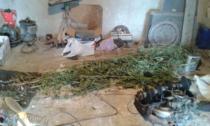 36-летний житель Красноармейского района запасся сушеной коноплей «для собственного употребления», фото-1