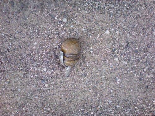 На пляже Мариуполя обезврежена граната (ФОТО), фото-1